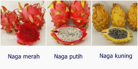 buah naga 5